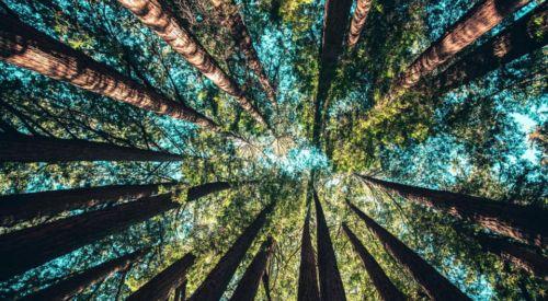 Debata dotycząca Europejskiej Strategii Leśnej